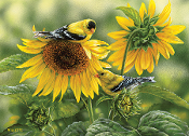 Sunflowers and Goldfinches