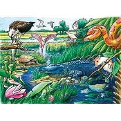 Animals of the Everglades
