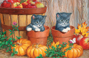 Pumpkin Kittens