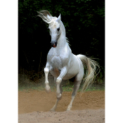 White Arabian Horse(horse shaped pieces)