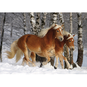 Haflinger Duo(horse shaped pieces)